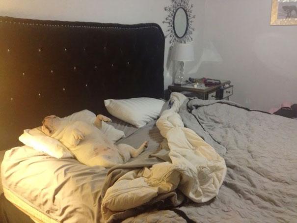 (1) Неодоливи кучиња спијат како мали човечиња