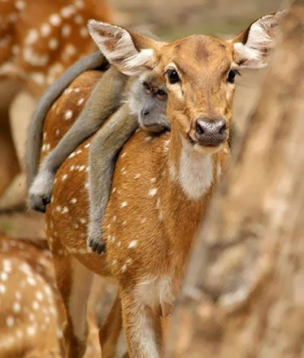 (8) 11 мрзливи животни кои се осмелиле да ја пробијат бариерата на видовите за превоз