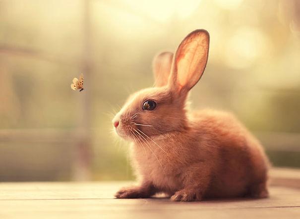 (1) Најслатките зајчиња кои некогаш сте ги виделе