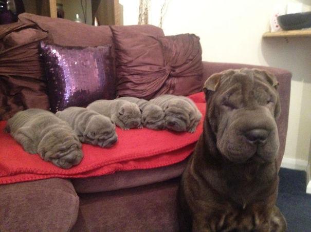 (1) Горди мајки кучиња со нивните мали и неодоливи бебиња