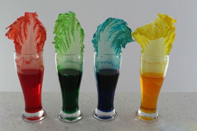 (3) 3 едноставни научни експерименти кои вреди да му ги покажете на вашето дете