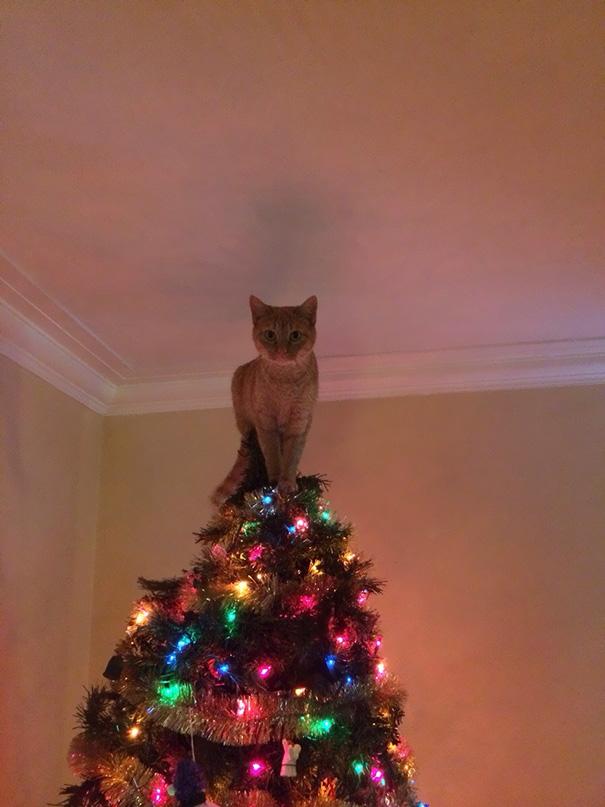 (1) Мачки со силен новогодишен дух помагаат при декорирање на домот