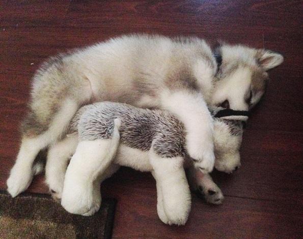 8 месечната Лука ги уништила сите свои играчки, освен ова плишано кученце