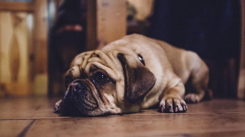 3 совети за вашиот миленик да се чувствува удобно кога е сам дома