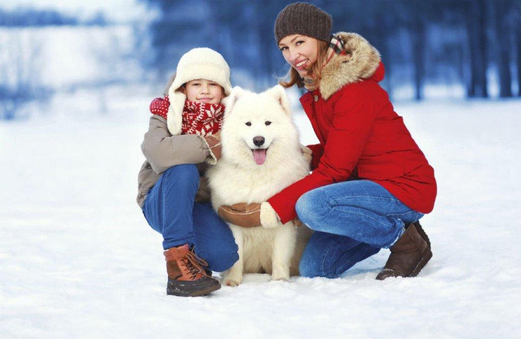 9 причини зошто е добро да имате куче