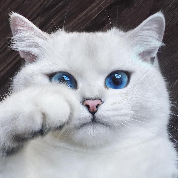 Запознајте го Коби: Мачето со најубавите очи на светот