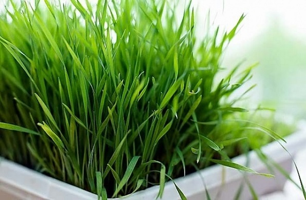 9 растенија кои може да ги одгледувате во вашата кујна