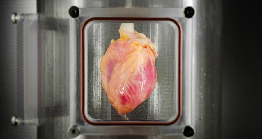 Научниците се чекор поблиску до создавањето човечки срца