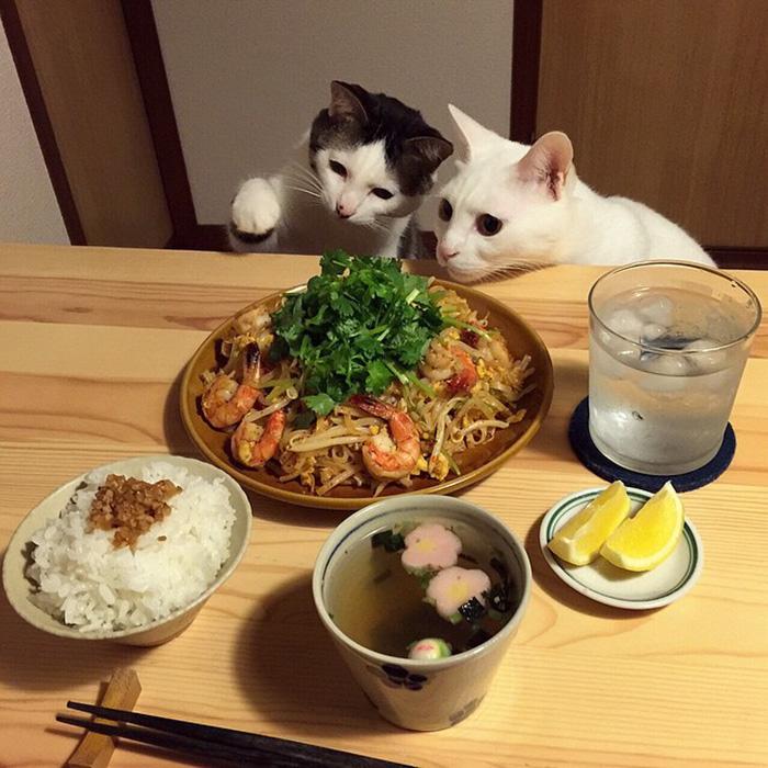 Мачиња кои обожаваат да ја набљудуваат човечката храна