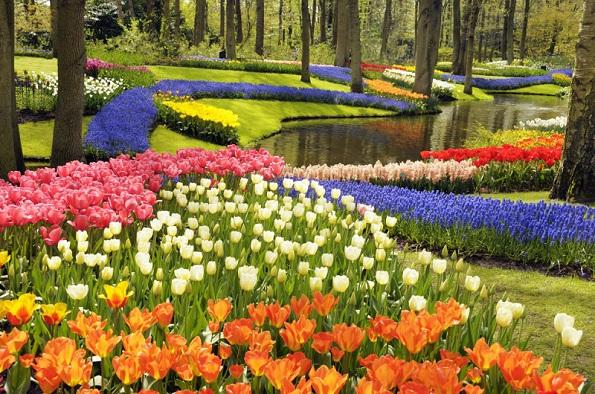Кеукенхоф градини, Холандија
