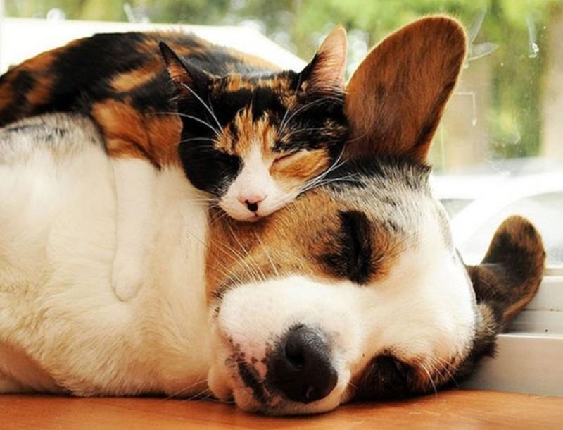 25 преслатки заспани животинчиња кои ќе ви го стоплат срцето