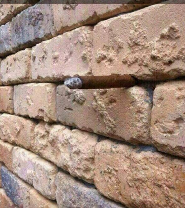 (1) Оптичка илузија со ѕид од цигли која ги полуди сите луѓе ширум светот