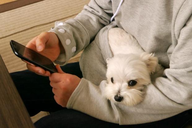 (3) Отсега можете да го носите вашето домашно милениче како кенгур бидејќи животот е прекрасен