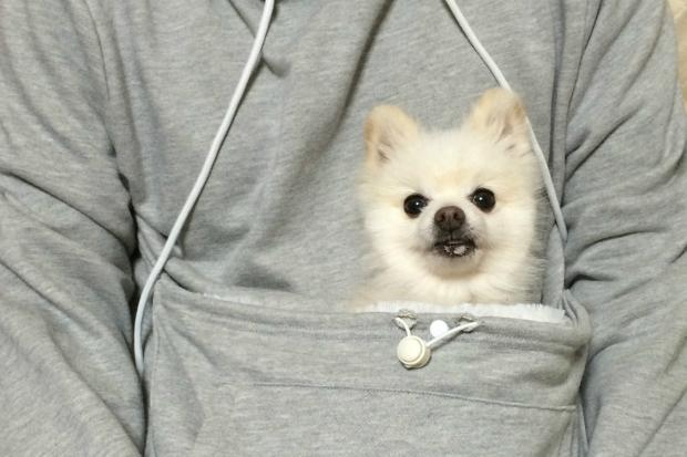 (4) Отсега можете да го носите вашето домашно милениче како кенгур бидејќи животот е прекрасен
