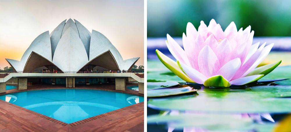 10 неверојатни архитектонски ремек-дела инспирирани од природата