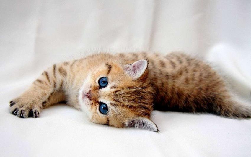 Дознајте како мачките покажуваат љубов