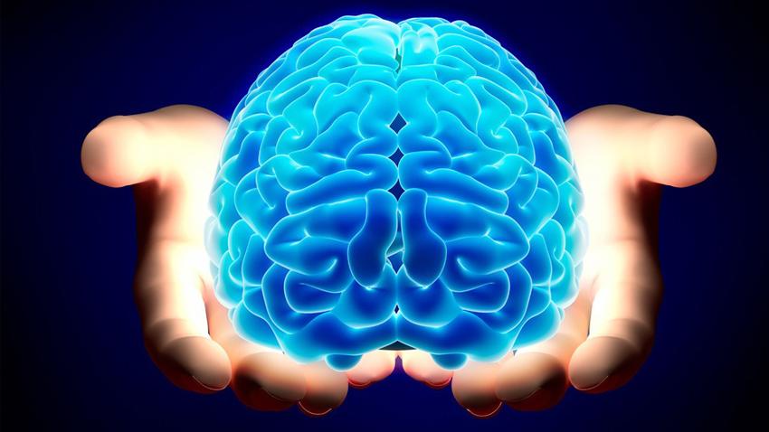 (1) Мозокот не функционира исто кај мажите и кај жените