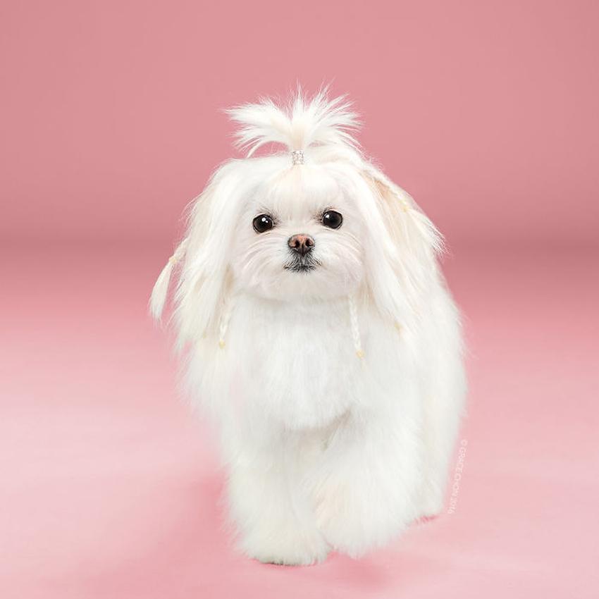 (16) Фризурата ги менува кучињата: Неверојатно слатки кучиња пред и по шишање