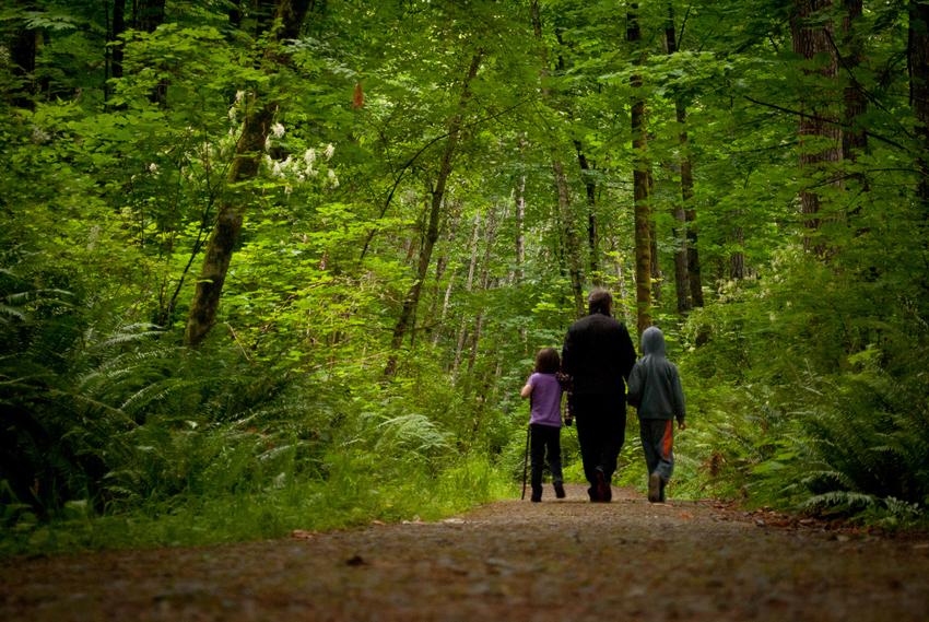 (2) Јапонците нè учат: Половина час во длабока шума го штити два месеца нашиот имунитет
