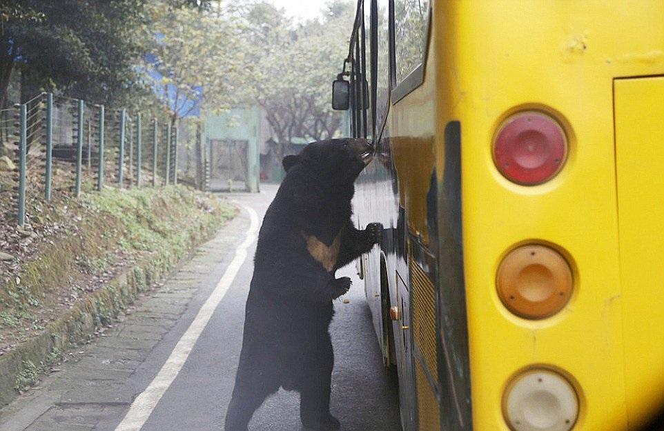 (2) Оваа зоолошка градина во Кина ги става луѓето во кафез, додека животните слободно шетаат