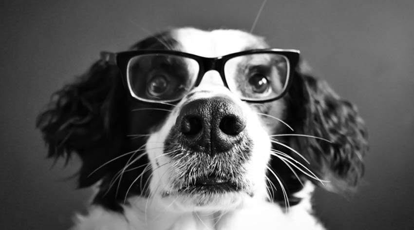 (1) Научниците потврдија: Вашето куче дефинитивно разбира што му зборувате