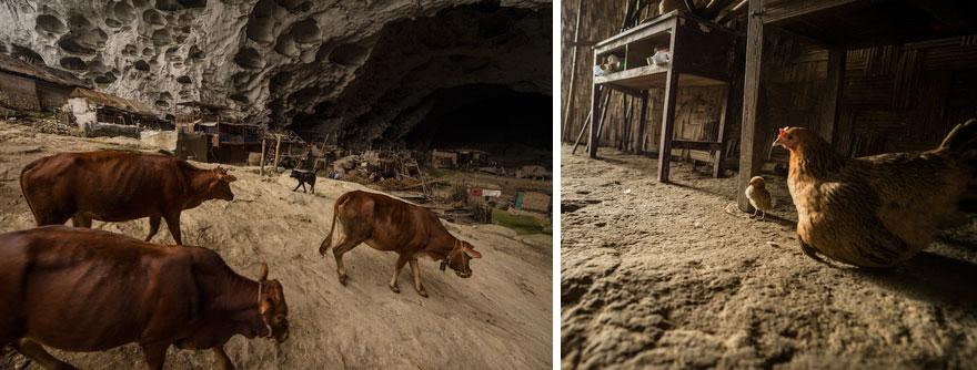 (3) Постои голема пештера во кина, со училиште и терен за кошарка, каде што живеат 100 луѓе