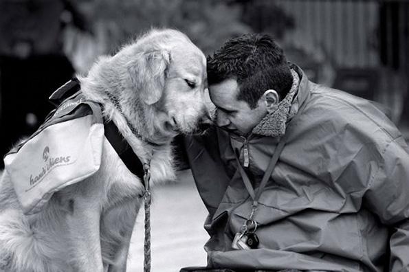 (10) Дали знаете зошто вашето куче е посреќно од вас?