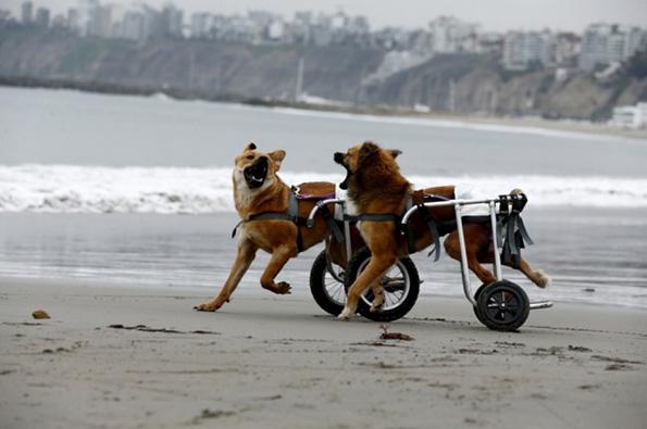 (2) Дали знаете зошто вашето куче е посреќно од вас?