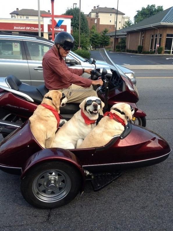 (8) Дали знаете зошто вашето куче е посреќно од вас?