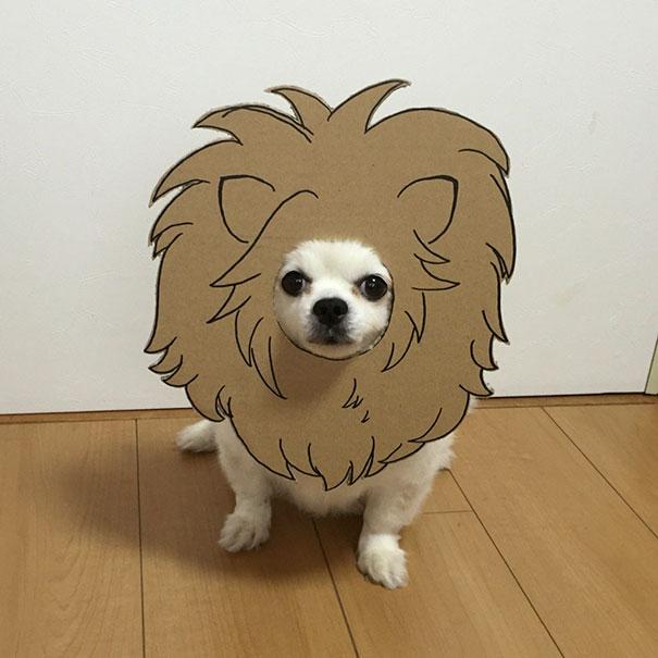 Јапонка создава смешни картонски фигури за нејзиното куче