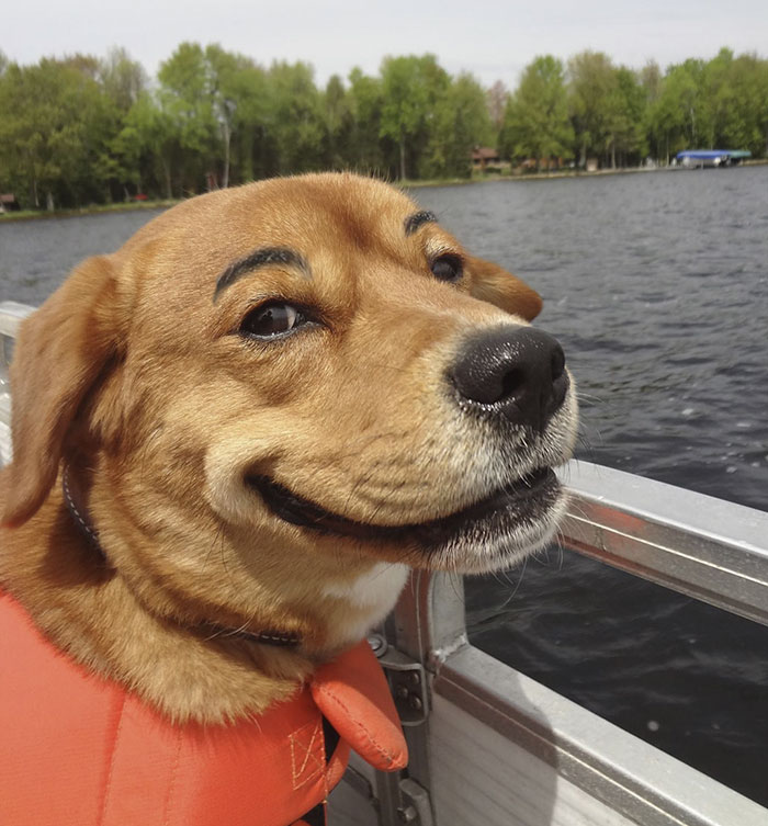 (2) Кучиња со веѓи што ќе ви го разубават денот