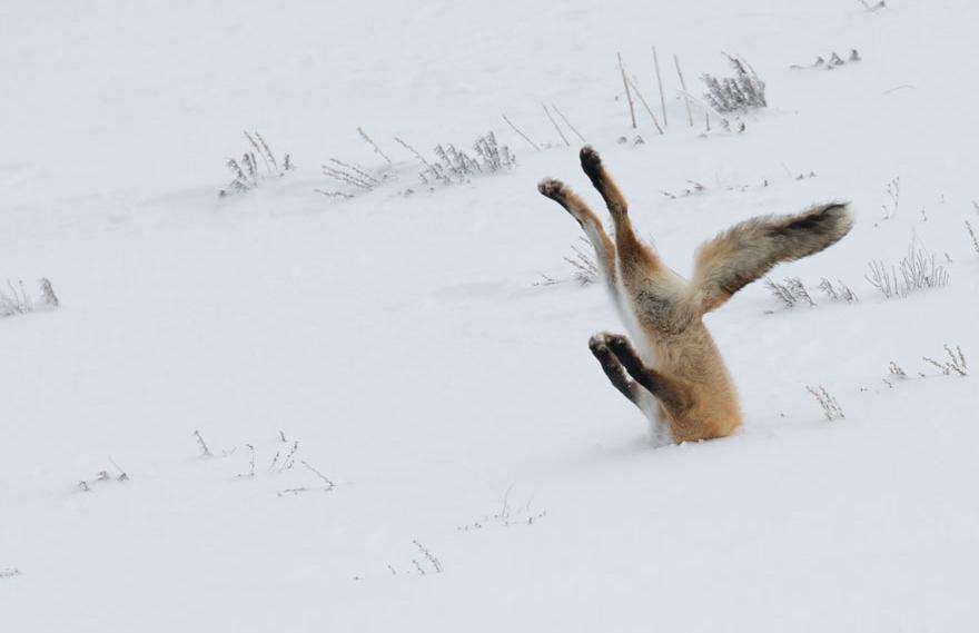 (2) Овие фотографии се доказ дека и животните доживуваат непријатни и смешни ситуации
