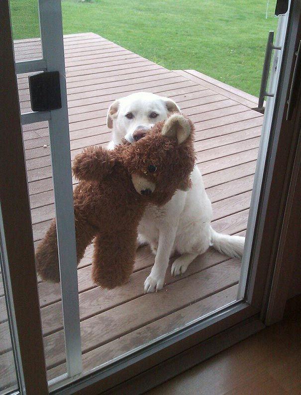 Животни кои се желни да влезат внатре во домот