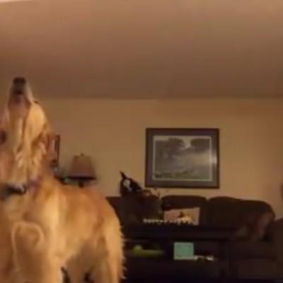 Куче обожава опера: Можете ли да го замислите во дует со Андреа Бочели?