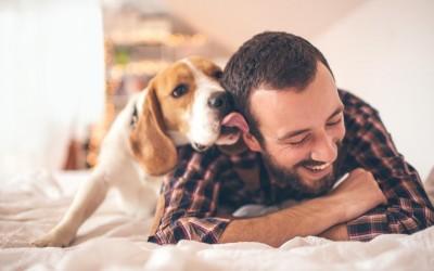 3 сигурни знаци дека вашето куче ви верува безусловно