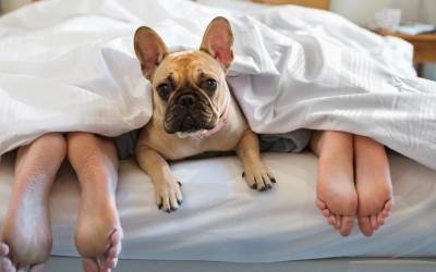 Зошто треба да му дозволите на вашето куче да спие со вас во креветот?