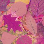 Тест: Ќе успеете ли да го пронајдете виолетовиот лист?