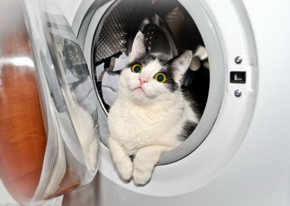 Тајни скривници каде што нема да ви текне да ја побарате вашата мачка