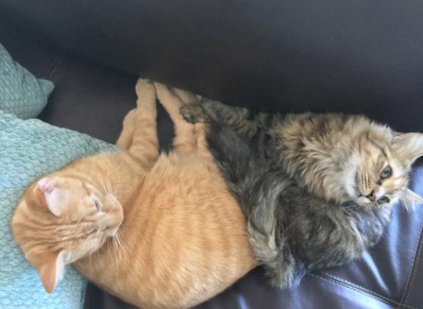 Љубовната приказна на овие две мачиња ќе ве разнежни!