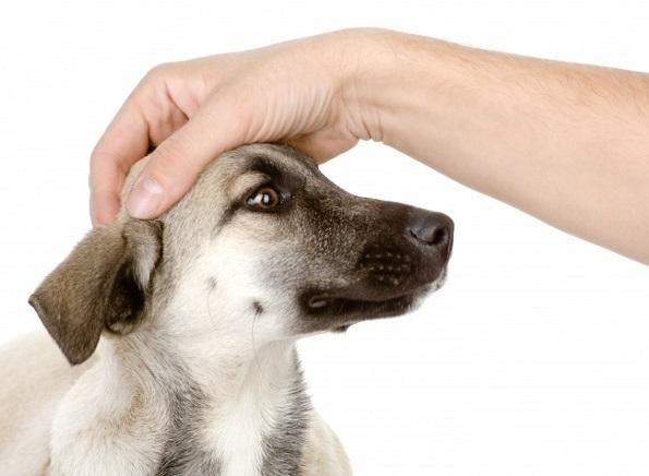11 навики со кои несвесно го нервирате вашето куче