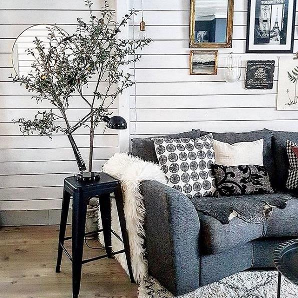 Маслинови дрвца – нареден нов голем тренд за во секој дом