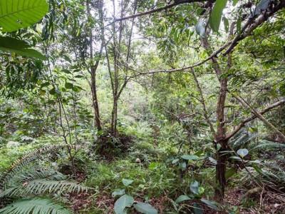 Можете ли да ги најдете сите 12 камуфлирани војници во џунглата?