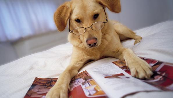 Зошто вашето куче е многу попаметно одошто мислите?