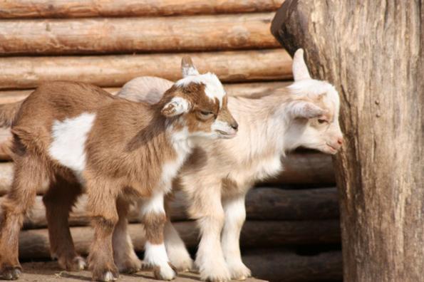 11 фасцинантни факти за животните кои нема да ви се верува дека се вистинити