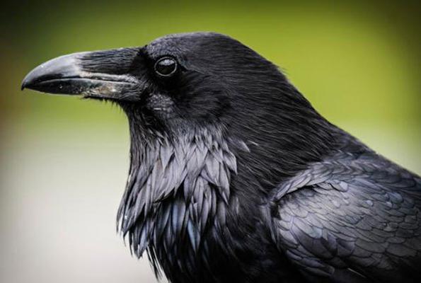 13 животни кои носат пораки од универзумот и нивното значење