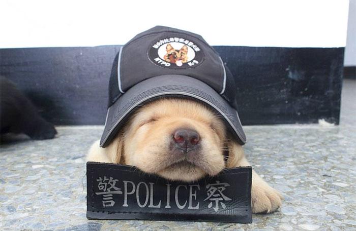 (5) najnovite-policiski-regruti-se-podgotveni-da-se-borat-protiv-kriminalot-so-svojata-neodolivost-www.kafepauza.mk