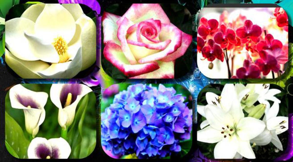 Женски тест на личноста: Одберете го вашето омилено цвеќе и дознајте повеќе за вас