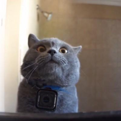 Дознајте што прават мачките кога мислат дека никој не ги гледа
