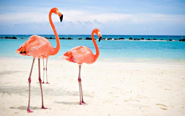 Погледнете ја оваа приватна плажа во Аруба каде што можете да се сончате со фламинга
