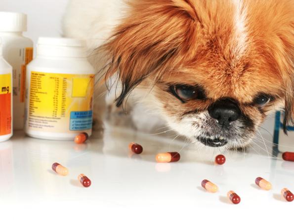 10 работи во домот што се многу опасни за вашето домашно милениче